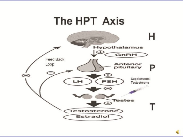 Anabolic Steroids and the HPTA Axis