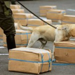 Can drug-sniffing police dogs detect anabolic steroids?