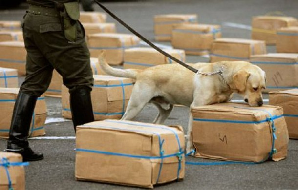 Drug Sniffing Dog Makes Steroid Bust at Mexican Border